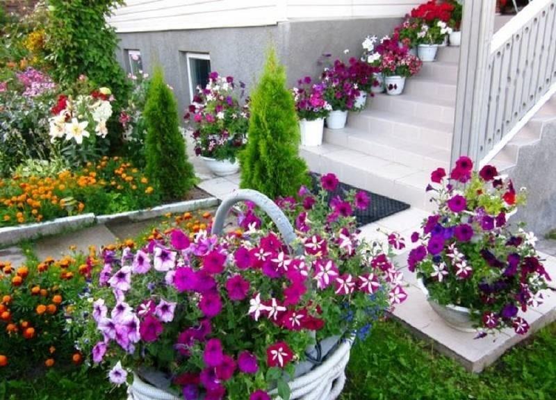 Оформление сада петуниями