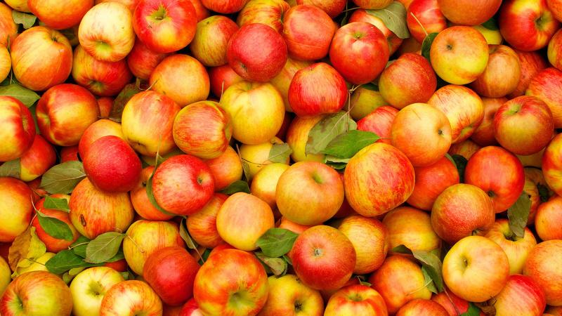 Сорт яблони карамельная