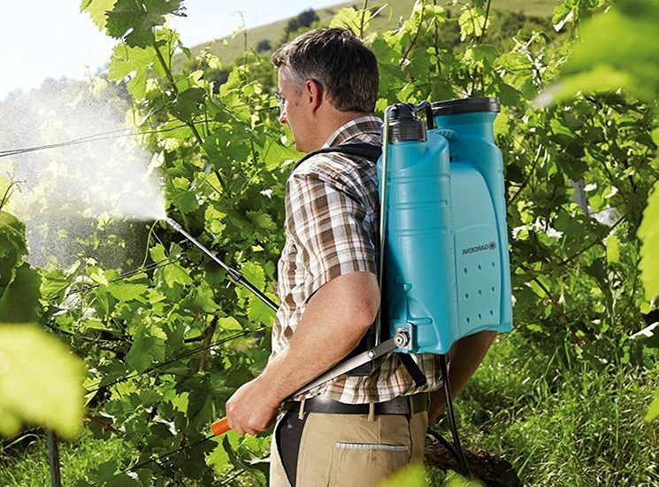 Профилактические обработки винограда – когда? как? чем?