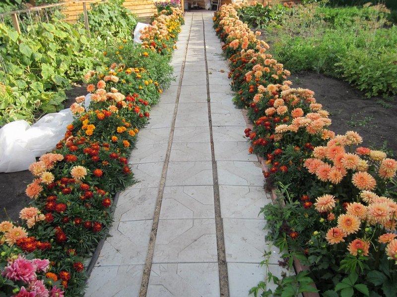 Бордюрные цветники оживят садовые дорожки на даче