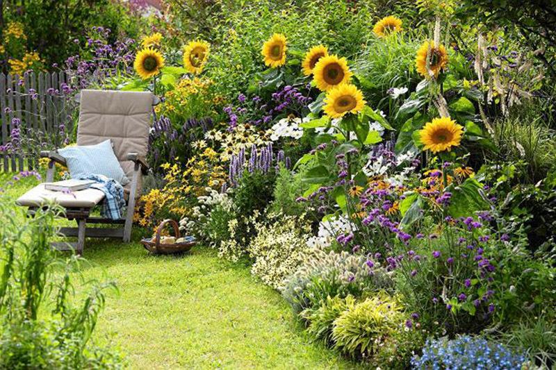 Подсолнух в саду фото