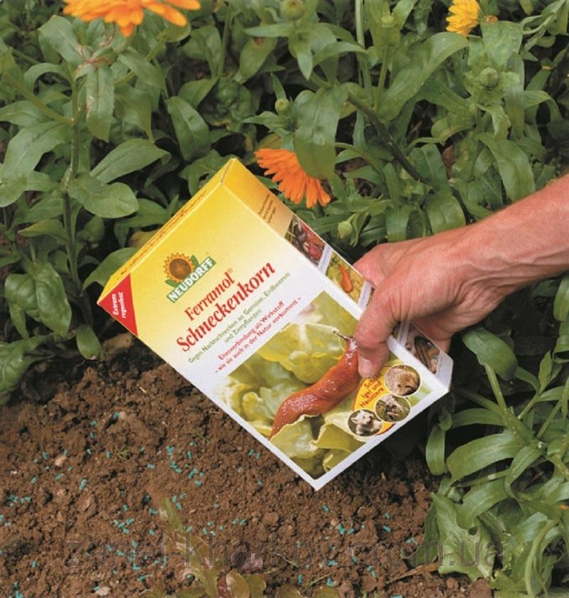 Феррамол - химическое средство от слизней в огороде