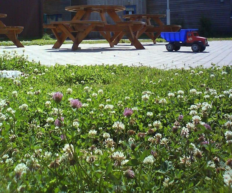 Газон из клевера - фото в период цветения