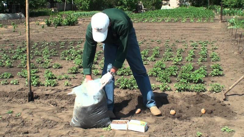 Гладкая посадка картофеля Под лопату