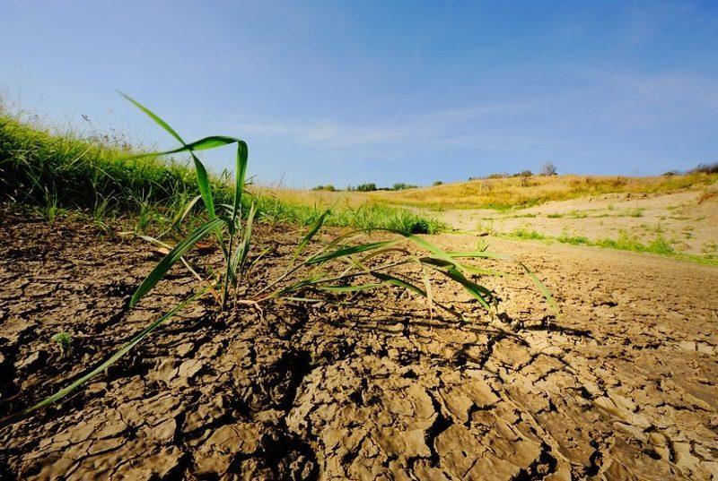 Глинистая почва на участке может стать причиной плохого развития растений и низкой урожайности