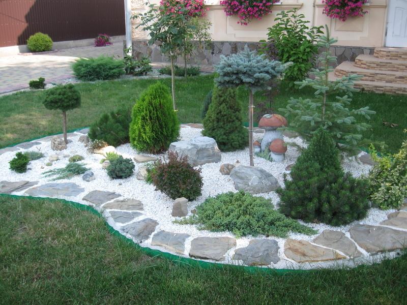 Лучшие хвойные растения для сада - 130 фото