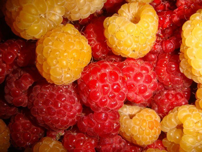 Какую малину лучше употреблять при беременности красную или желтую