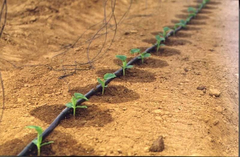 Использование капельного полива в борьбе с сорной травой