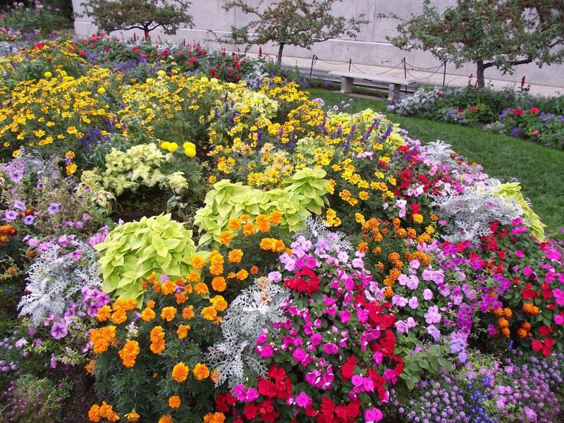 Какие цветы можно сажать в открытый грунт семенами 94