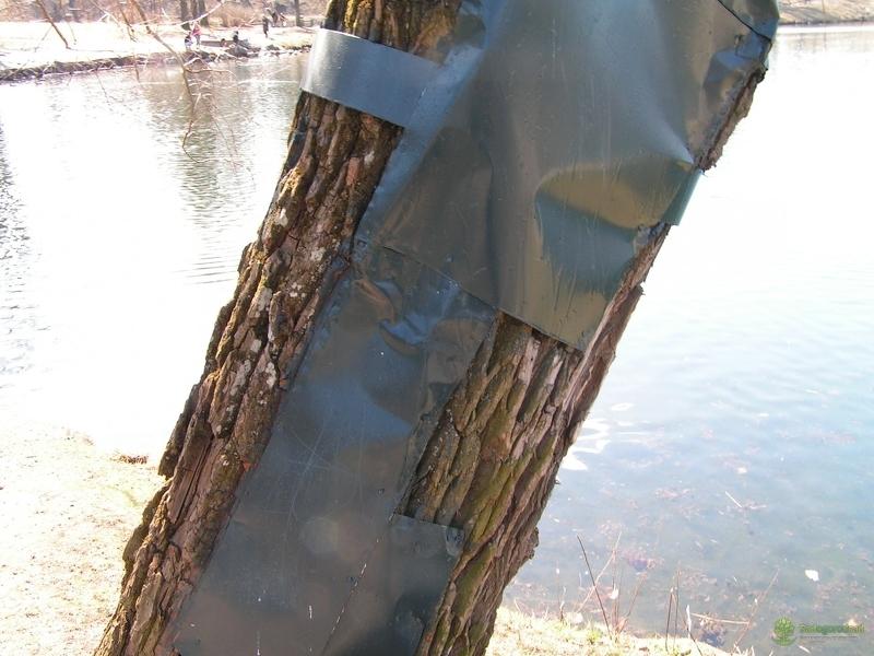 Лечение дупла хирургическими методами повреждает защитный барьер дерева