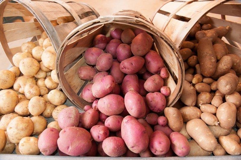 Лучшие сорта картофеля для выращивания на территории России