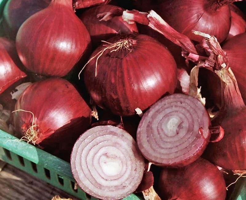 Красный лук репчатый - сорт Ред барон