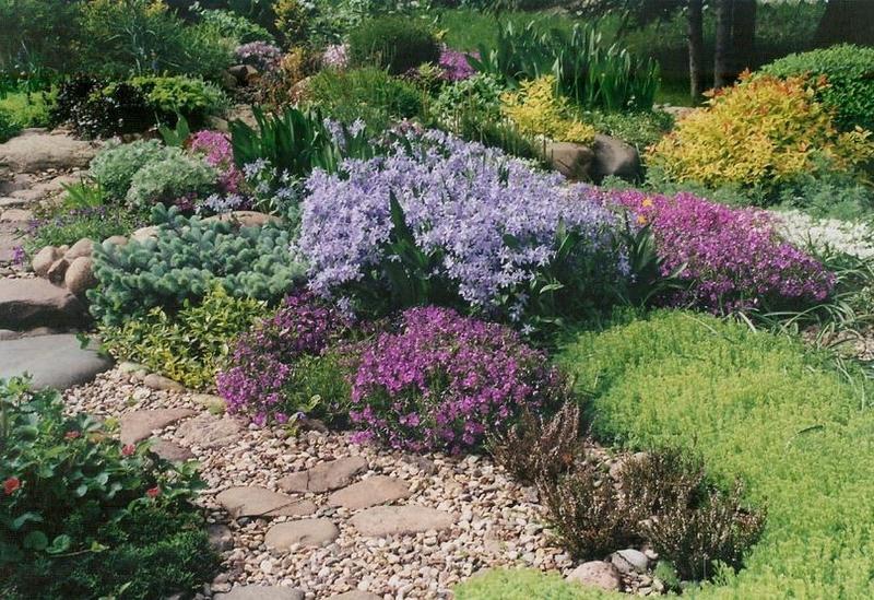 Колокольчики в дизайне сада с какими цветами сочетается