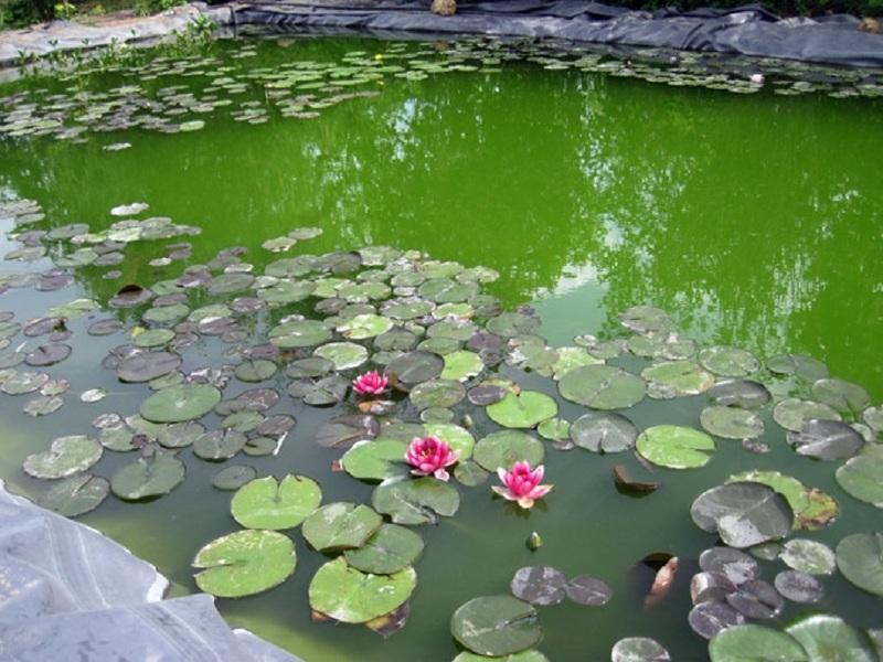вода цветет и рыбалка