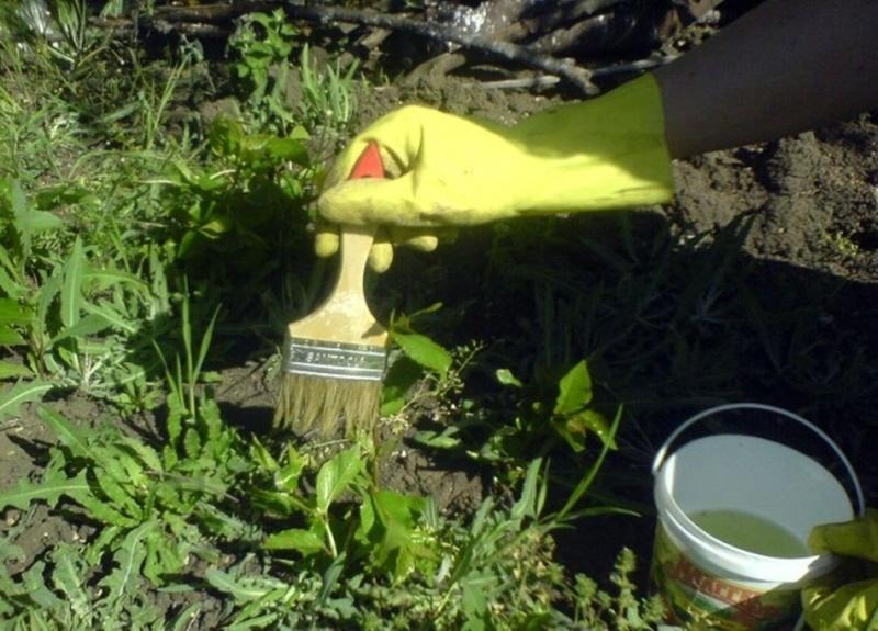 Нанесение гербицидов кисточкой