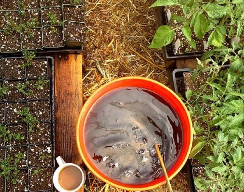 Навозный раствор используют для удобрения большинства огородных культур