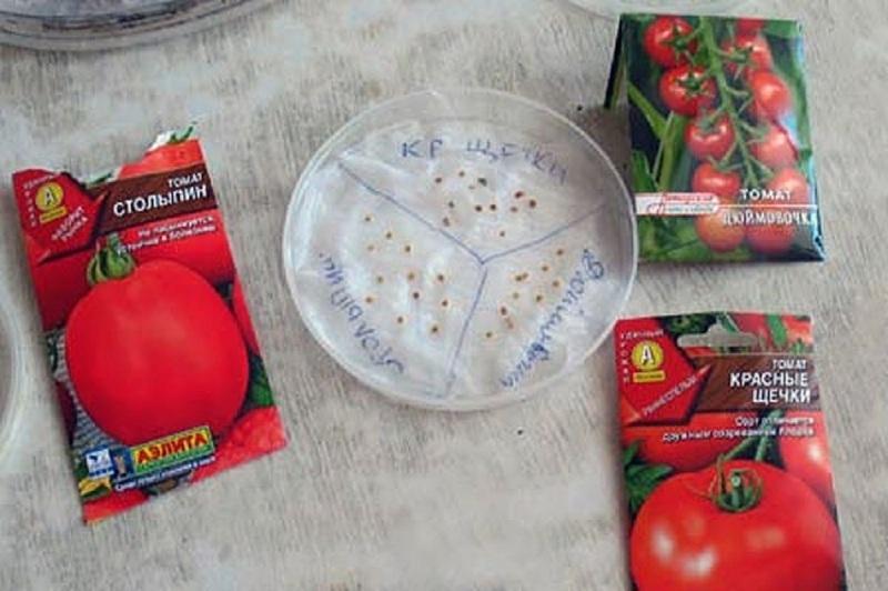 Как вырастить рассады помидоров из семян в домашних условиях
