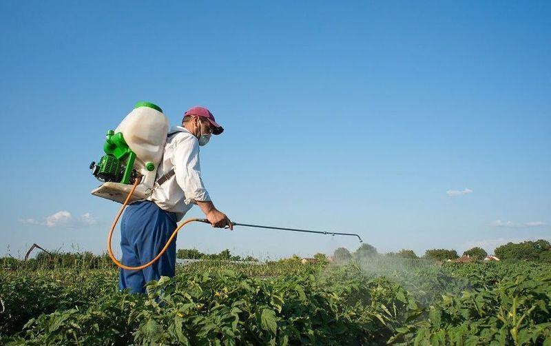 Опрыскивание престижем от колорадского жука проводится в защитной одежде