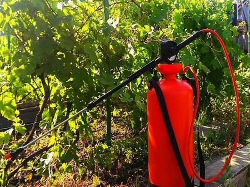 Обрабатывать виноград после цветения химией рекомендуется с помощью специального опрыскивателя