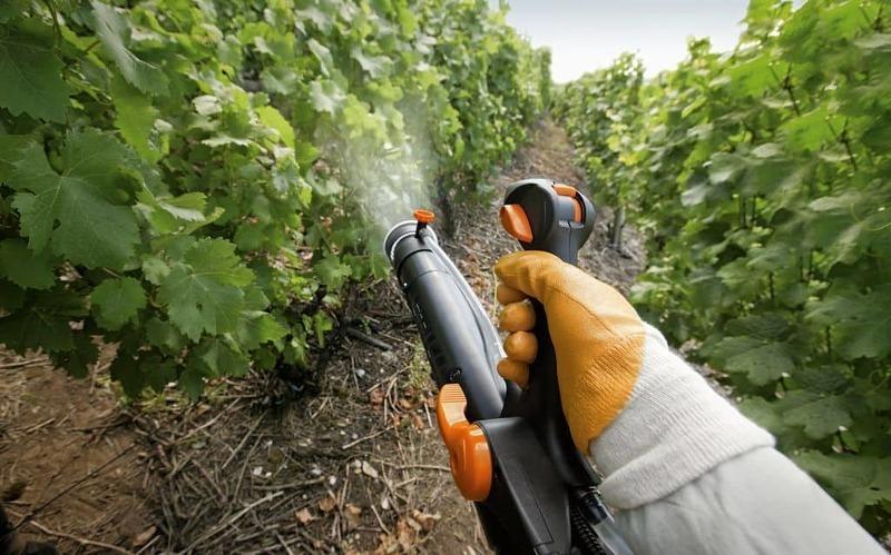 Для обработки винограда от заболеваний чаще всего применяют йод и соду