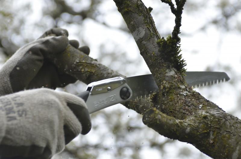 Обрезка сада весной: фото и схемы обрезки