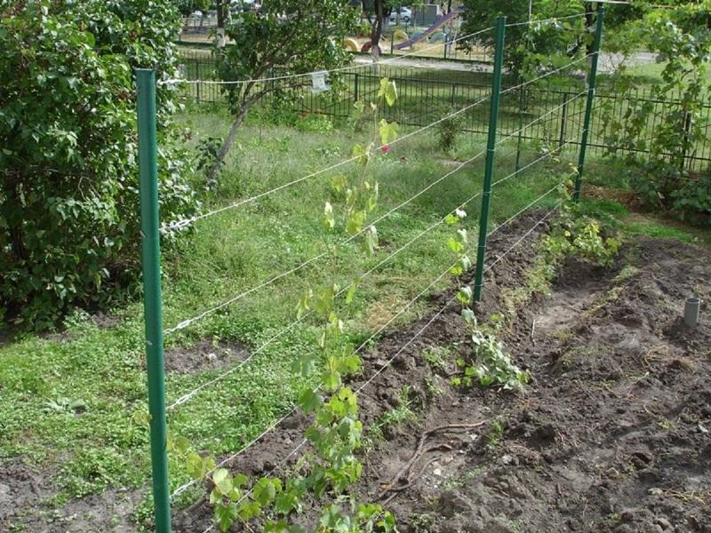 Держатель для винограда своими руками фото фото 448