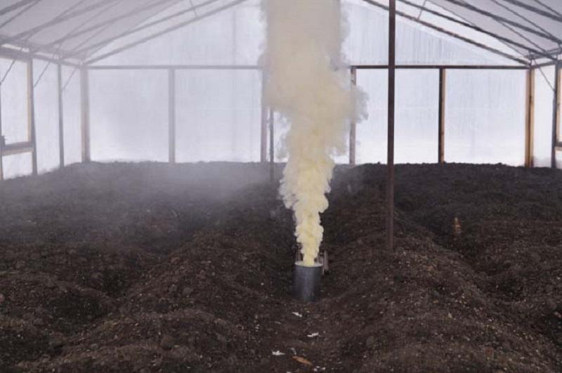 Окуривание теплицы табачной пылью перед началом посева