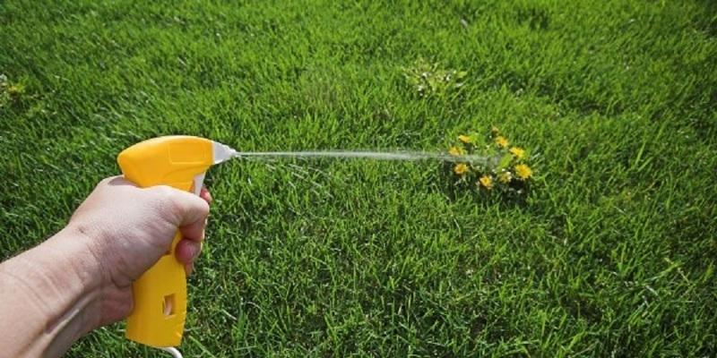 Опрыскивание сорняков керосином