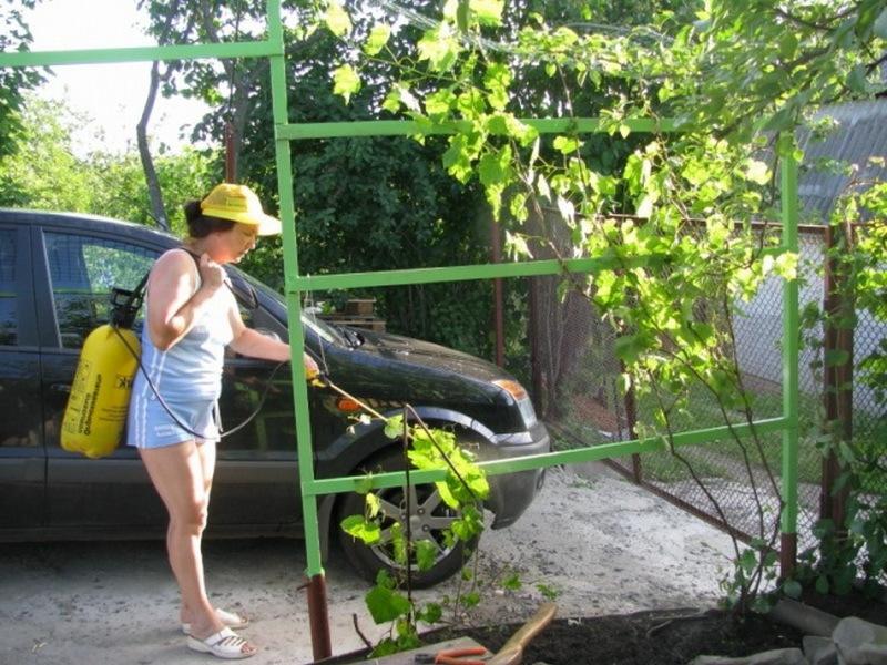 Опрыскивание винограда после цветения