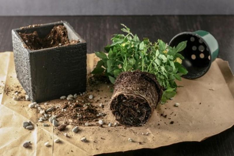 удобрения для комнатных растений в домашних условиях для цветка
