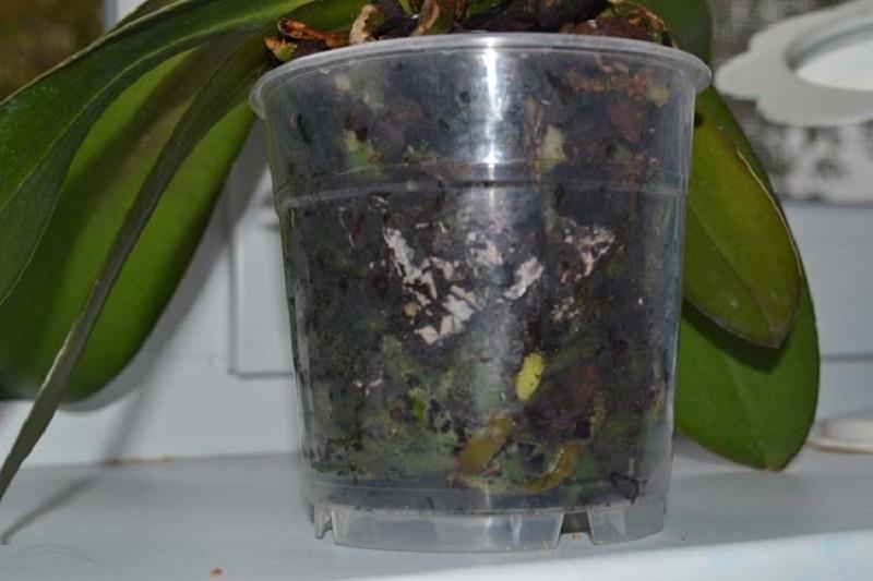 Вянет и не цветет орхидея - срочно меняйте субстрат и пересаживайте