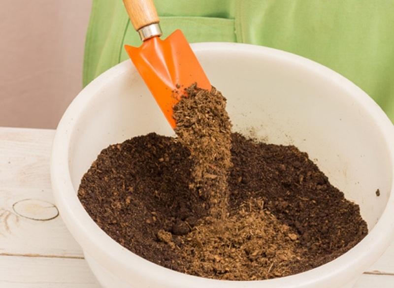 Подготовка грунта в лунки под выращивание арбузов на Урале