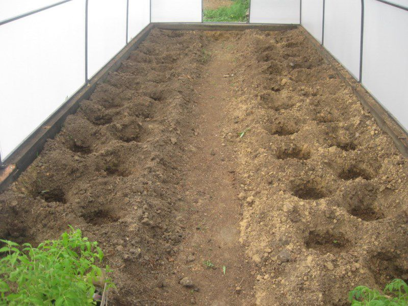 Выращиваем огурцы под пленкой - экономим время и воду