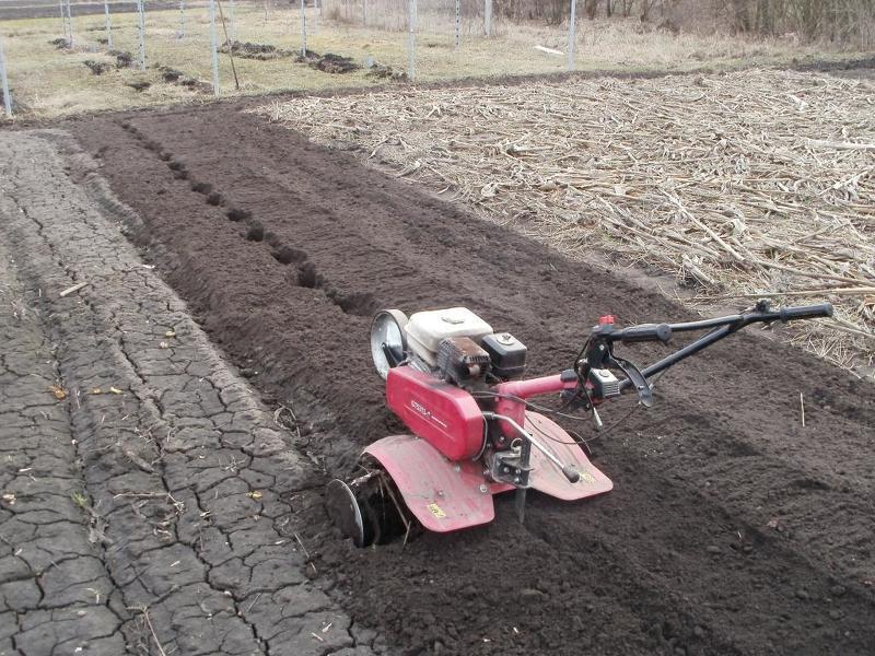 Подготовка почвы под посадку черной редьки