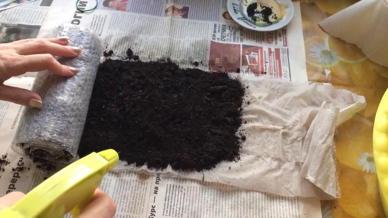 Выращиваем рассаду капусты в домашних условиях
