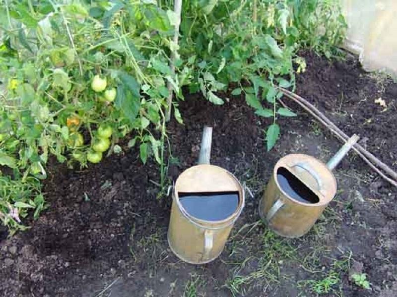 Раствор йода в огороде используют для защиты от фитофторы