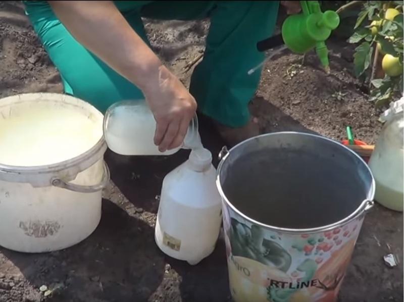 Приготовление и подкормка огурцов молоком с йодом