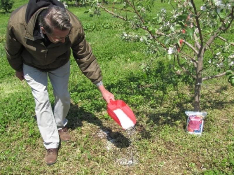 Подкормка плодовых деревьев весной