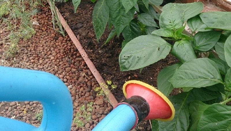 Почва для рассады томатов и перцев. Подготовка почвы