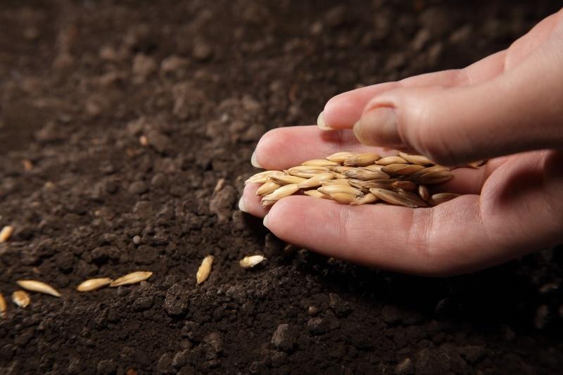 Посадка семян для рассады