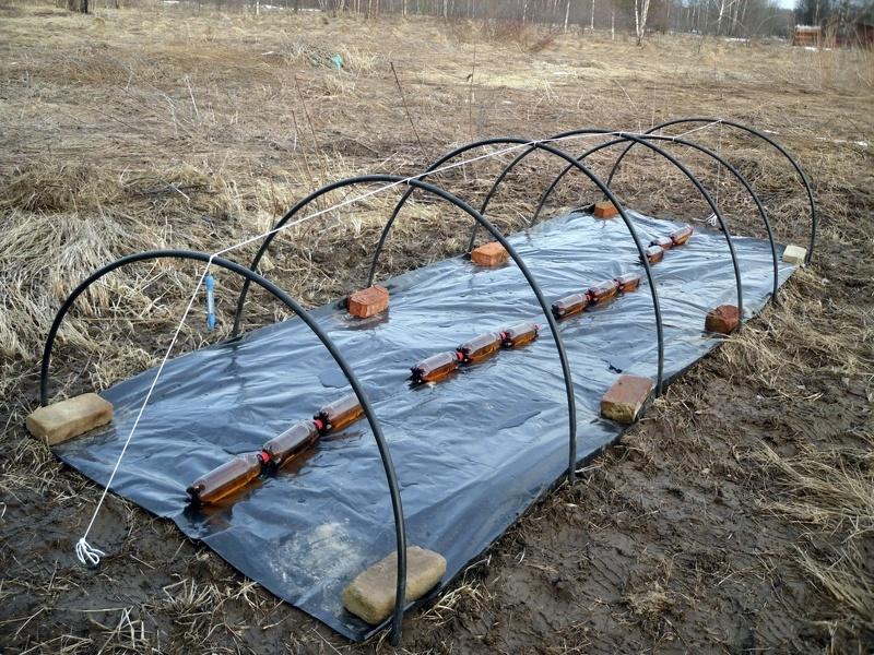 Посев овощей в открытый грунт под пленку