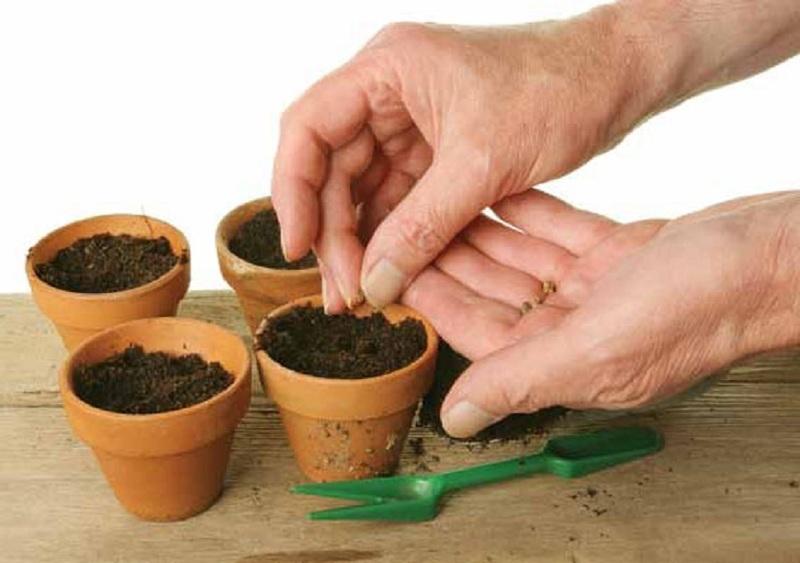 Посев семян в подготовленный грунт