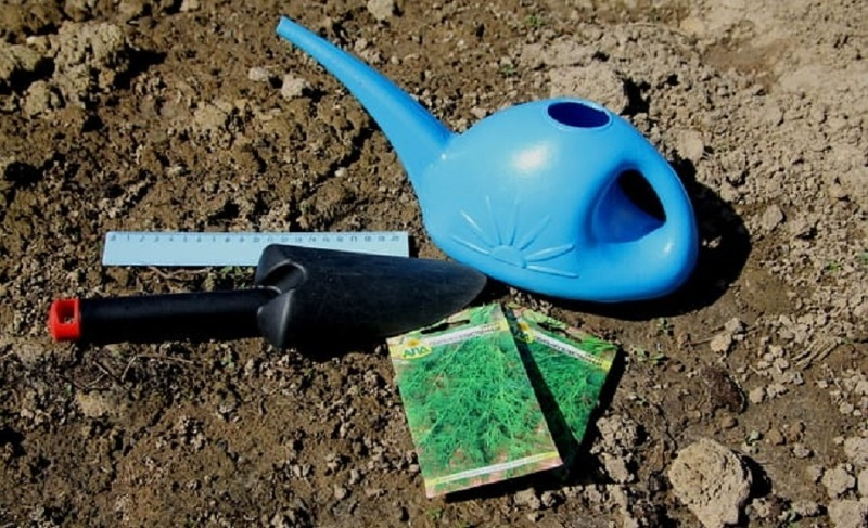 Перед посевом укропа почву хорошо увлажняют