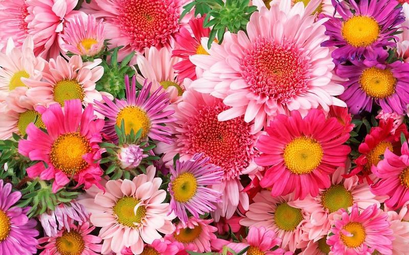 лонас цветок