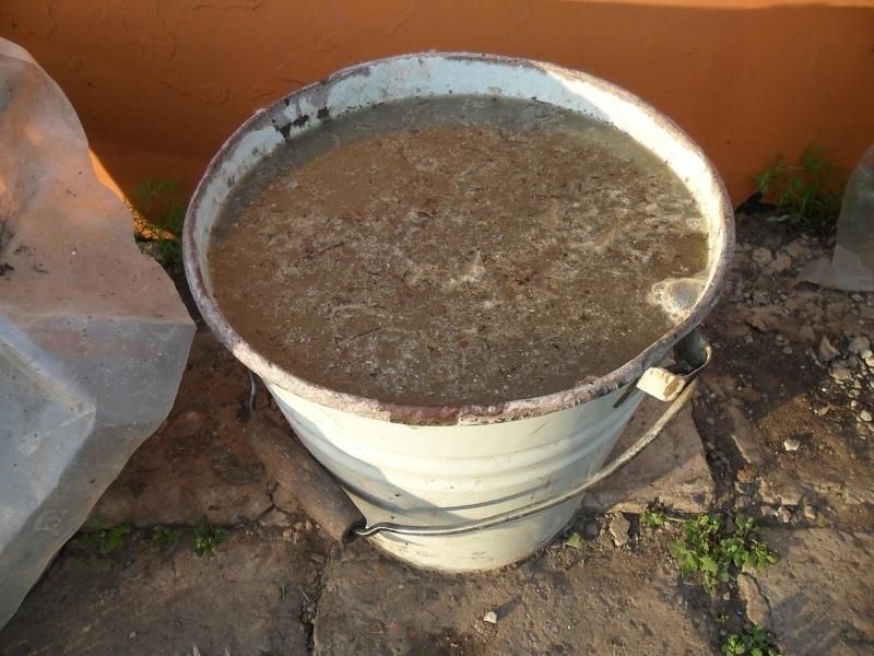 Приготовление подкормки для огурцов из куриного помета