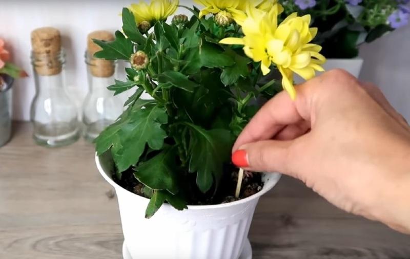 Спички в горшках с цветами для избавления от мошек