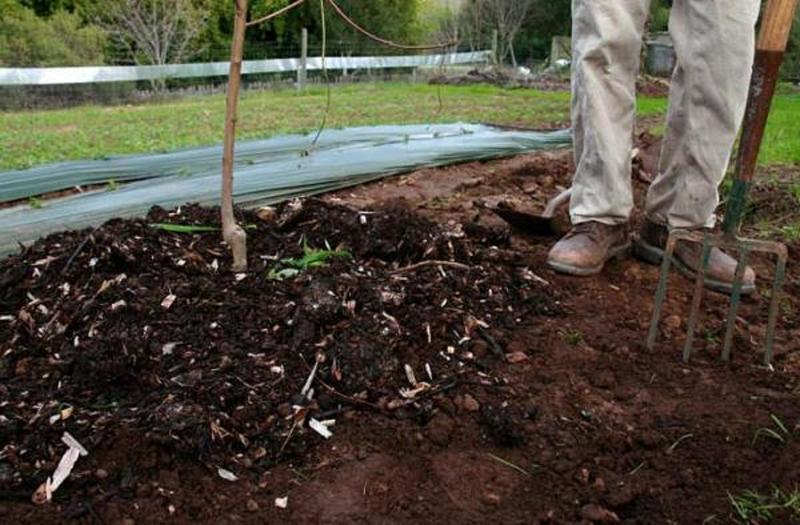 Рыхление почвы и уборка мусора - профилактика от вредителей осенью