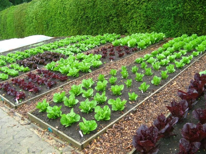 Прямоугольная модель посадок огорода