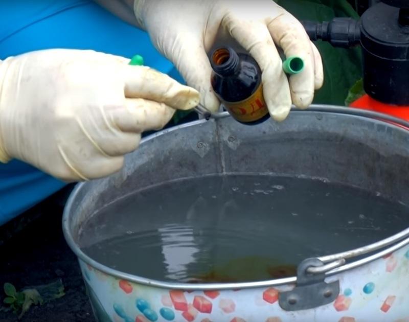 Приготовление раствора для подкормки огурцов йодом