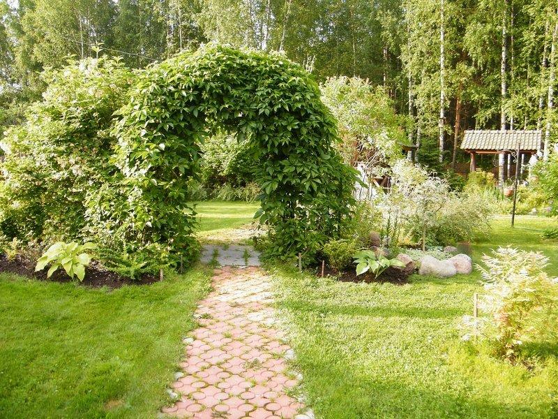 Садовая арка увитая плющом